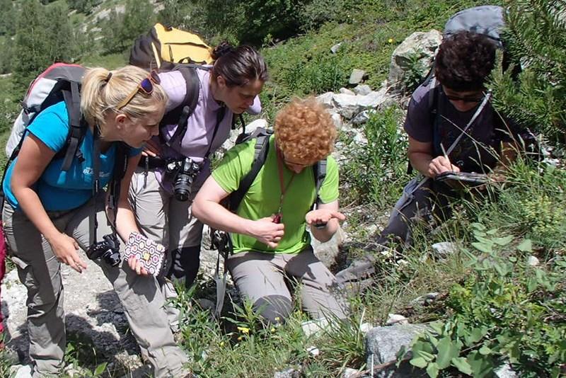 Sorties botaniques rencontres botaniques alpines gentiana